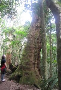 Kaylum-Tree