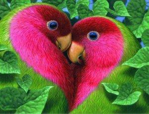 heart-love birds